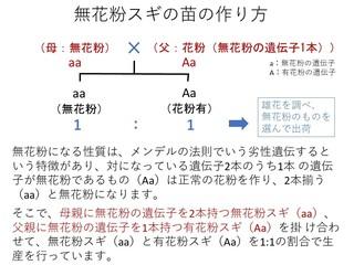 �B無花粉スギの原理b.jpg