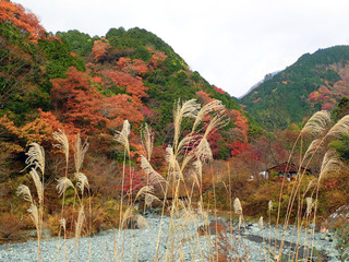 �Eススキと紅葉.jpg