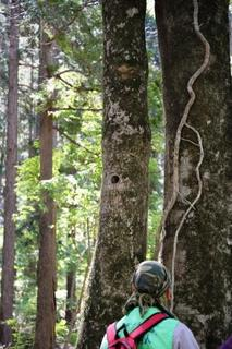 やどりきの森へ行こう_2.jpg