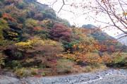 水源林の紅葉