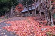 晩秋の水源林
