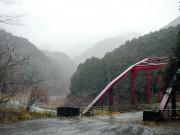 春の雨に煙る三月の水源林