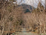 冬枯れの水源林