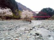 水温む四月の水源林